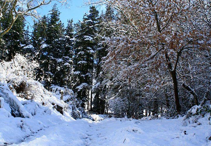 posada-tollo-picos-europa-camino-nieve